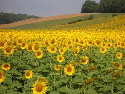 BLH - Gelassene Atmosphäre - Gesundheit für Mensch und Umwelt